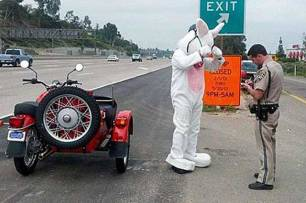 Easter-Bunny-stopped-for-not-wearing-a-helmet